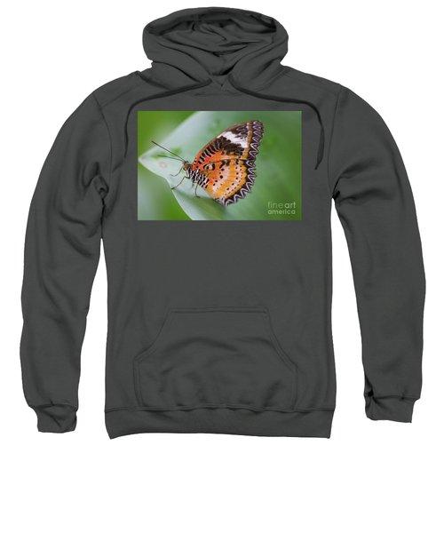 Butterfly On The Edge Of Leaf Sweatshirt