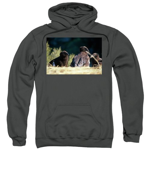 California Condors Sweatshirt