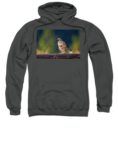 California Quail Sweatshirt