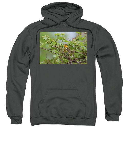 Cape May Warbler Sweatshirt