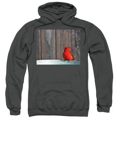 Cardinal Drinking Sweatshirt