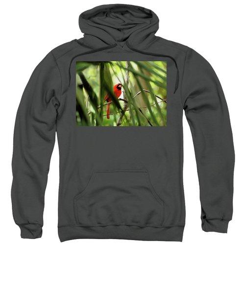 Cardinal Spy Sweatshirt