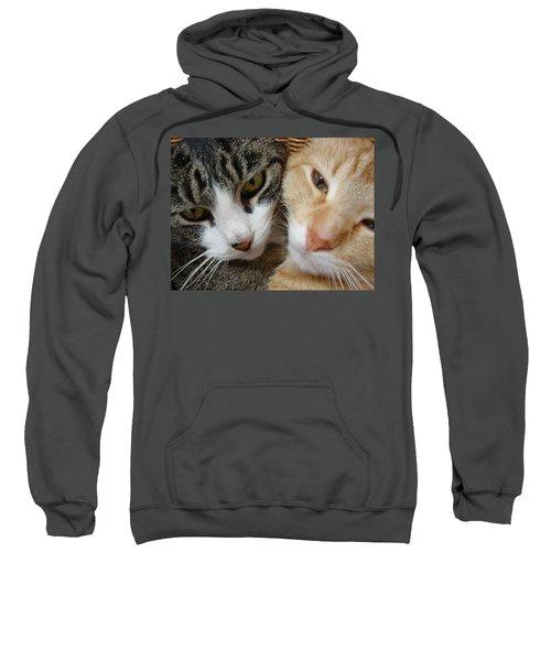 Cat Faces Sweatshirt