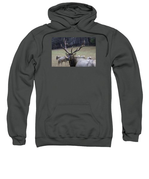 Cataloochee Elk Sweatshirt