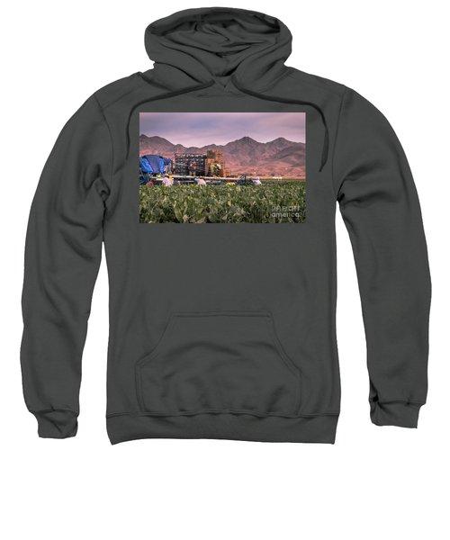 Cauliflower Harvest Sweatshirt by Robert Bales