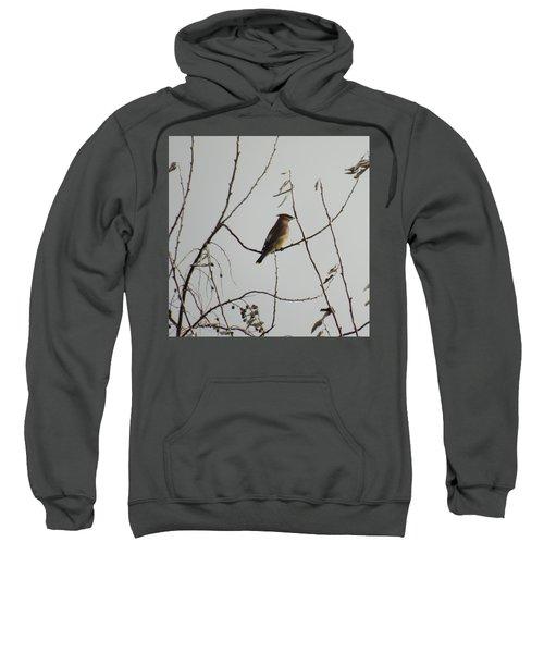 Cedar Wax Wing In Tree Sweatshirt by Kenneth Willis