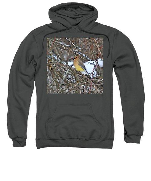 Cedar Wax Wing Sweatshirt by Robert Pearson