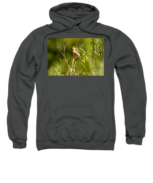 Cedar Waxwing At Glacier Sweatshirt by Adam Jewell