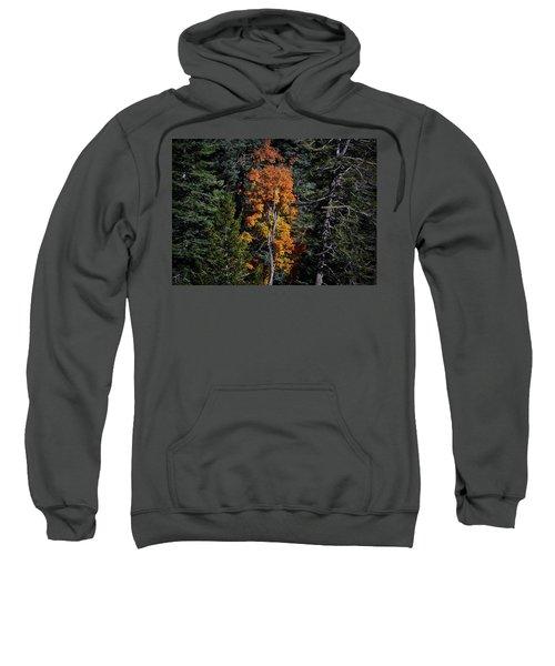 Change Of Seasons Sweatshirt