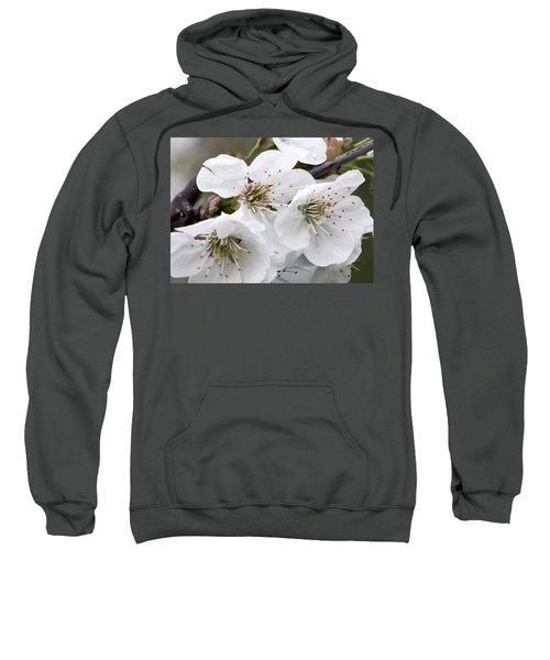 Cherry Blosoms Sweatshirt