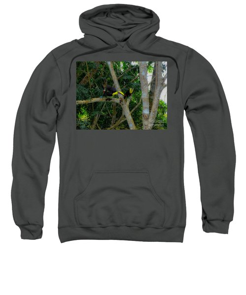 Chestnut-mandibled Toucans Sweatshirt