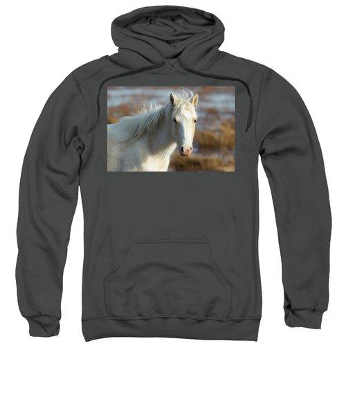 Chincoteague White Pony Sweatshirt