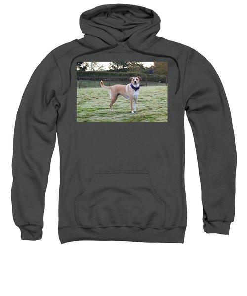 Chloe At The Dog Park Sweatshirt