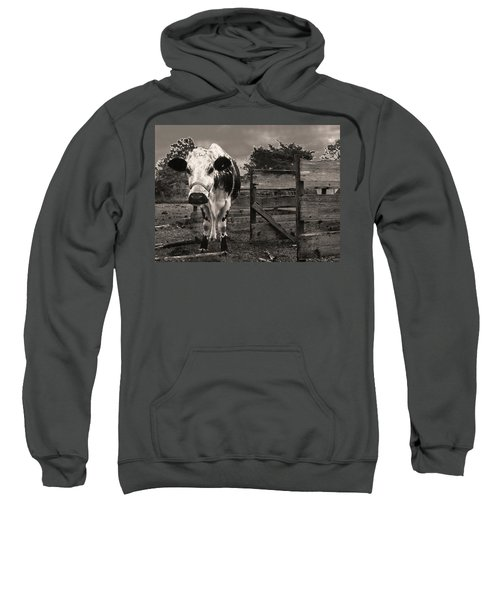 Chocolate Chip At The Stables Sweatshirt