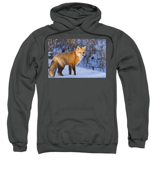 Christmas Fox Sweatshirt