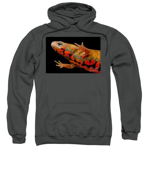 Chuxiong Fire Belly Newt Sweatshirt