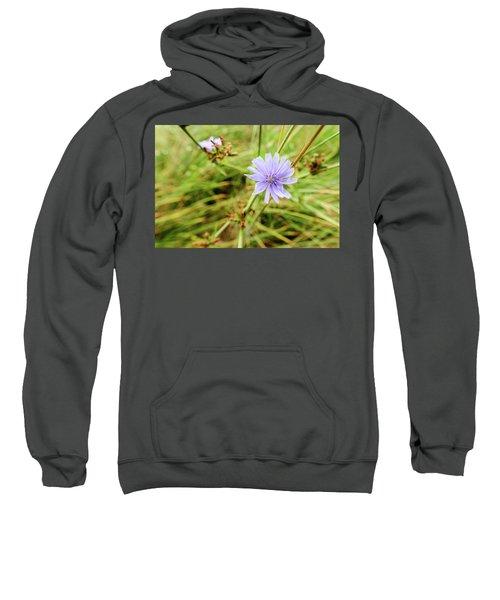 Cichorium Intybus, Chicory Sweatshirt