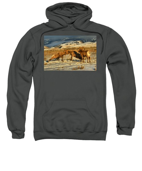 Clash Of The Bighorn Brawlers Crop Sweatshirt