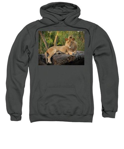 Classic Young Male Sweatshirt