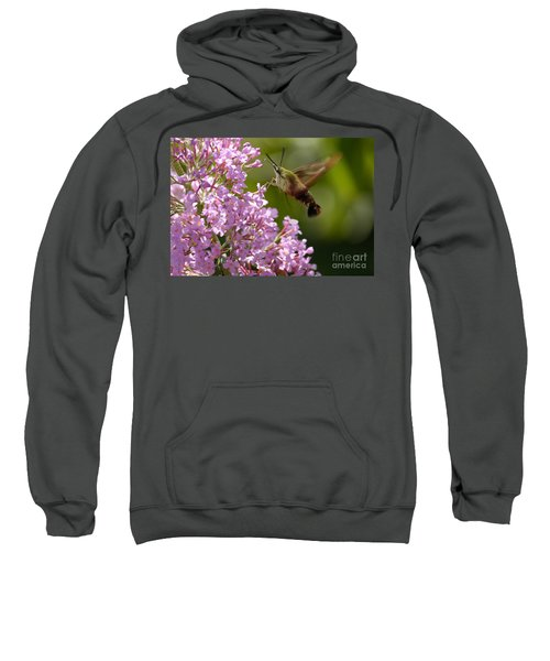 Clearwing Pink Sweatshirt