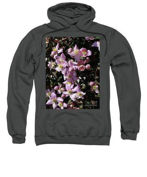 Clematis Montana  In Full Bloom Sweatshirt