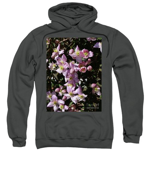 Clematis Montana  In Full Bloom Sweatshirt