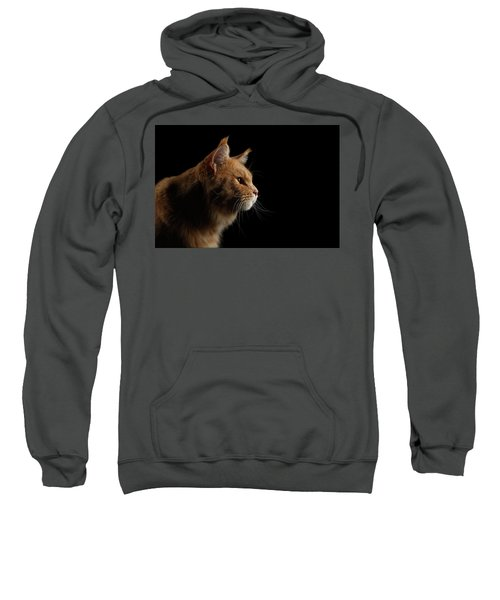 Close-up Portrait Ginger Maine Coon Cat Isolated On Black Background Sweatshirt