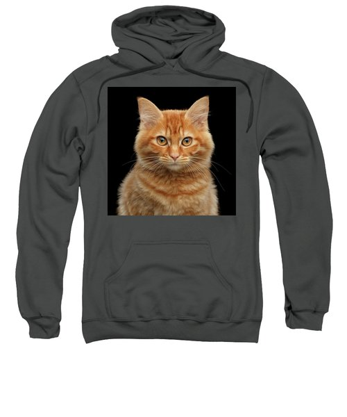Close-up Portrait Of Ginger Kitty On Black Sweatshirt