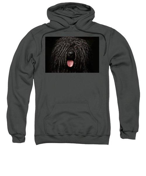 Close Up Portrait Of Puli Dog Isolated On Black Sweatshirt