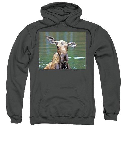 Close Wet Moose Sweatshirt