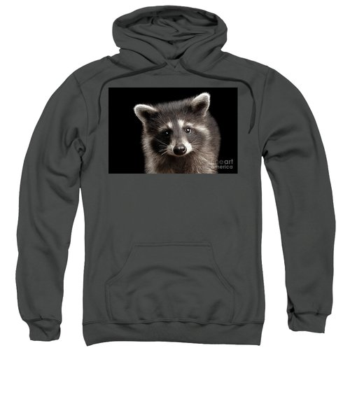 Closeup Portrait Cute Baby Raccoon Isolated On Black Background Sweatshirt