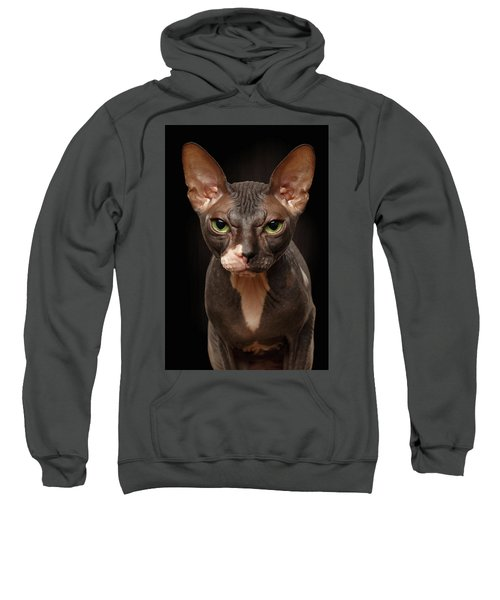 Closeup Portrait Of Grumpy Sphynx Cat Front View On Black  Sweatshirt