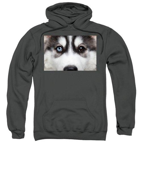 Closeup Siberian Husky Puppy Different Eyes Sweatshirt