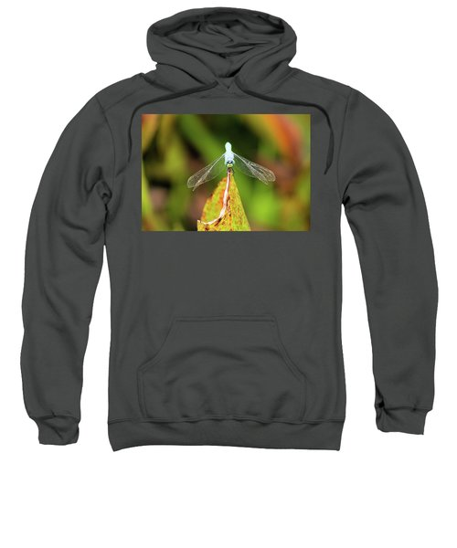 Clown Face Dragonfly Sweatshirt