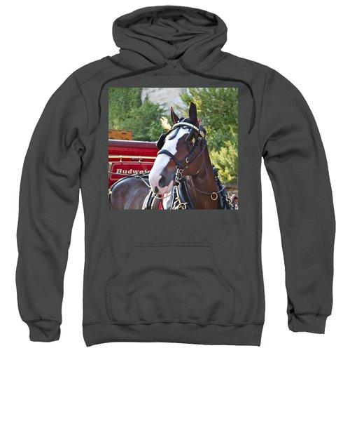 Clydesdale At Esp Sweatshirt