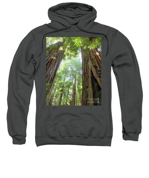 Coastal Redwoods  Sweatshirt