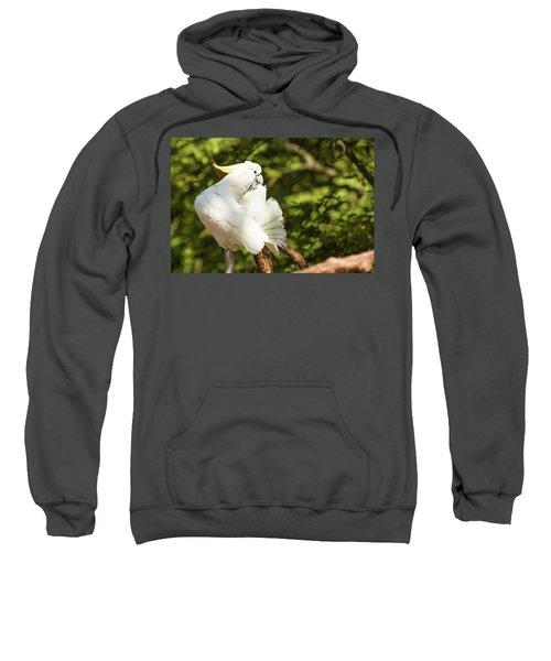 Cockatoo Preaning Sweatshirt