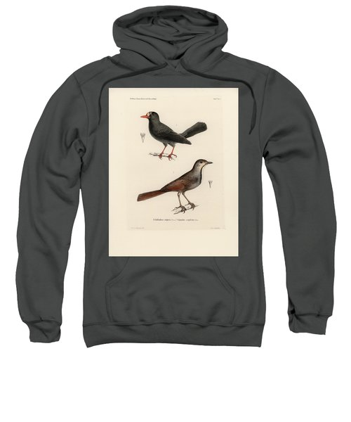 Sweatshirt featuring the drawing Collared Palm Thrush And Chestnut-fronted Helmetshrike by J D L Franz Wagner