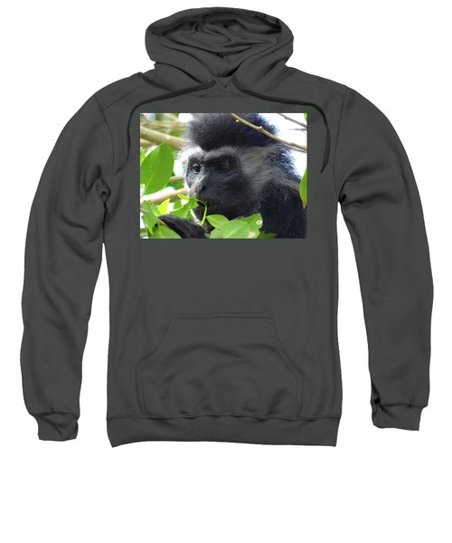 Colobus Monkey Eating Leaves In A Tree Close Up Sweatshirt