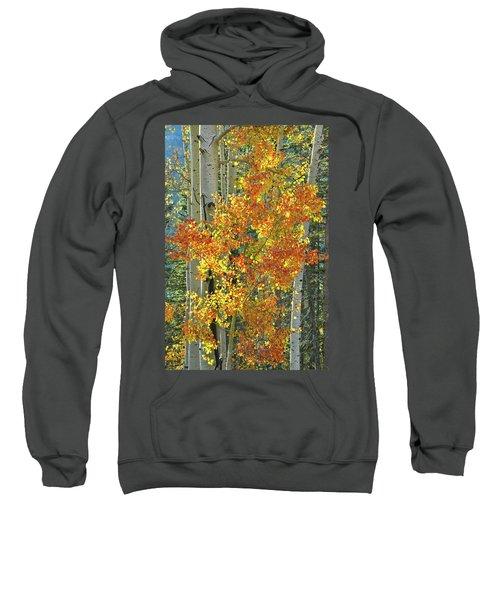 Colorful Aspen Along Million Dollar Highway Sweatshirt