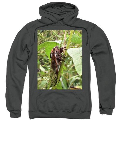 Colorful Summer Cicada Sweatshirt