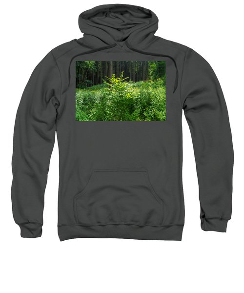 Colors Of A Forest In Vogelsberg Sweatshirt