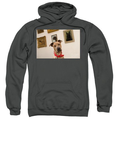Commodor Sweatshirt