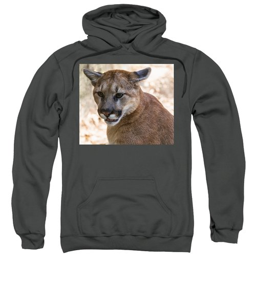 Cougar Portrait Sweatshirt