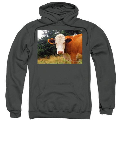 Sweatshirt featuring the photograph Cow In Pasture by MGL Meiklejohn Graphics Licensing