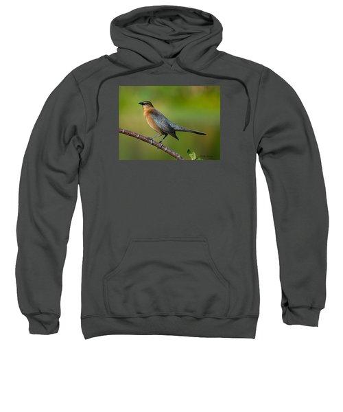 Cowbird Sweatshirt