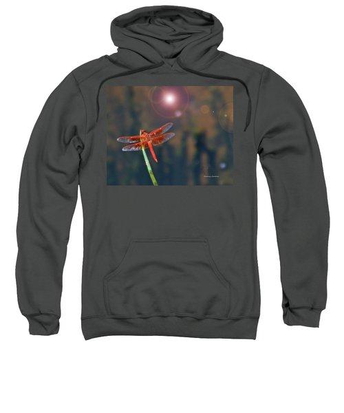 Crackerjack Dragonfly Sweatshirt