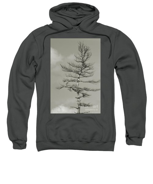 Crooked Tree Sweatshirt