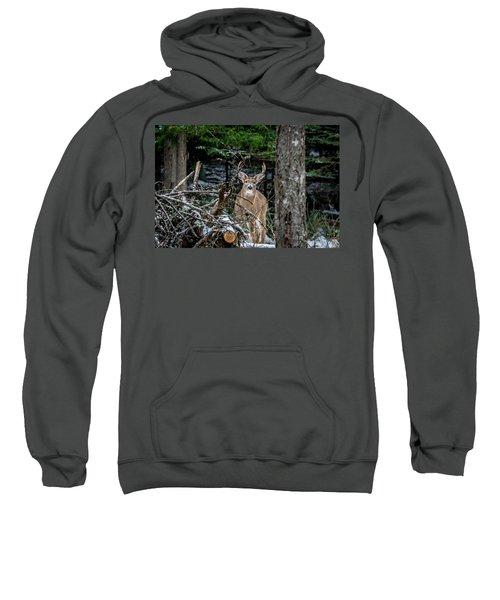 Curious Buck Sweatshirt