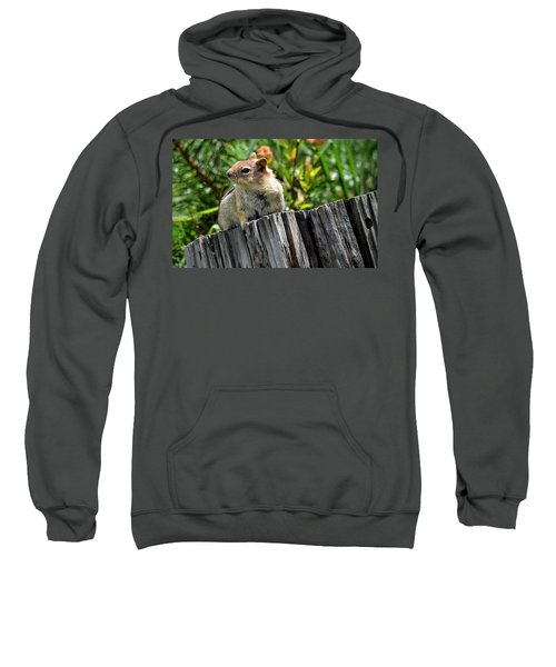 Curious Chipmunk Sweatshirt